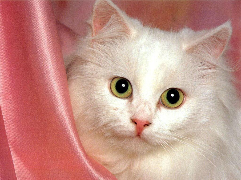 Kedi resimleri-14