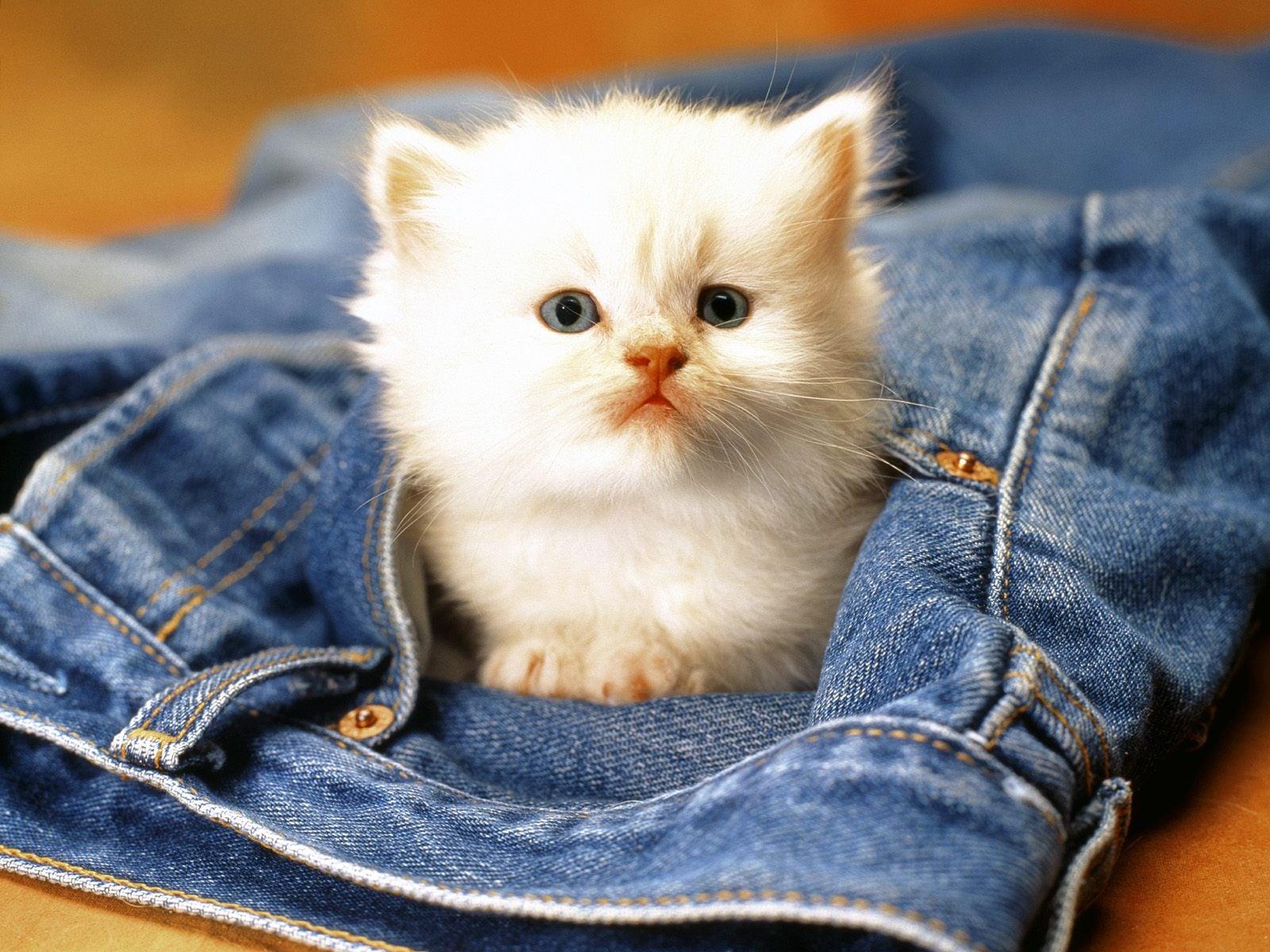 Kedi resimleri-15