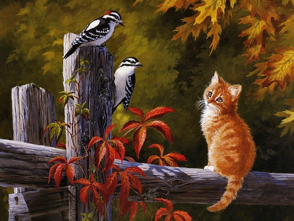 Kedi resimleri-17