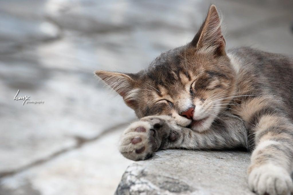 kedi resimleri – 55