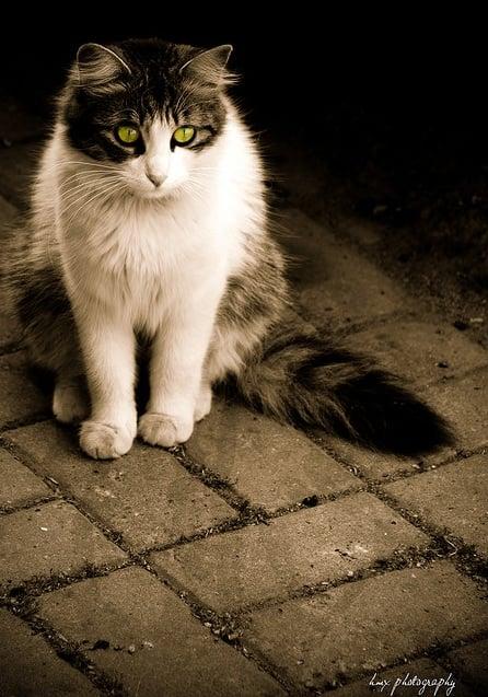 kedi resimleri – 56