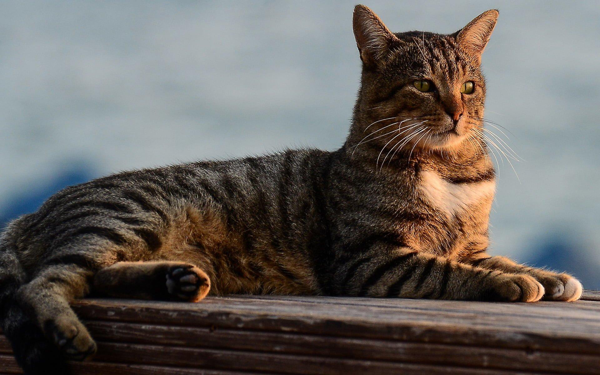 kedi resimleri – 58