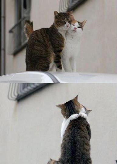 kedilerin müthiş aşkı