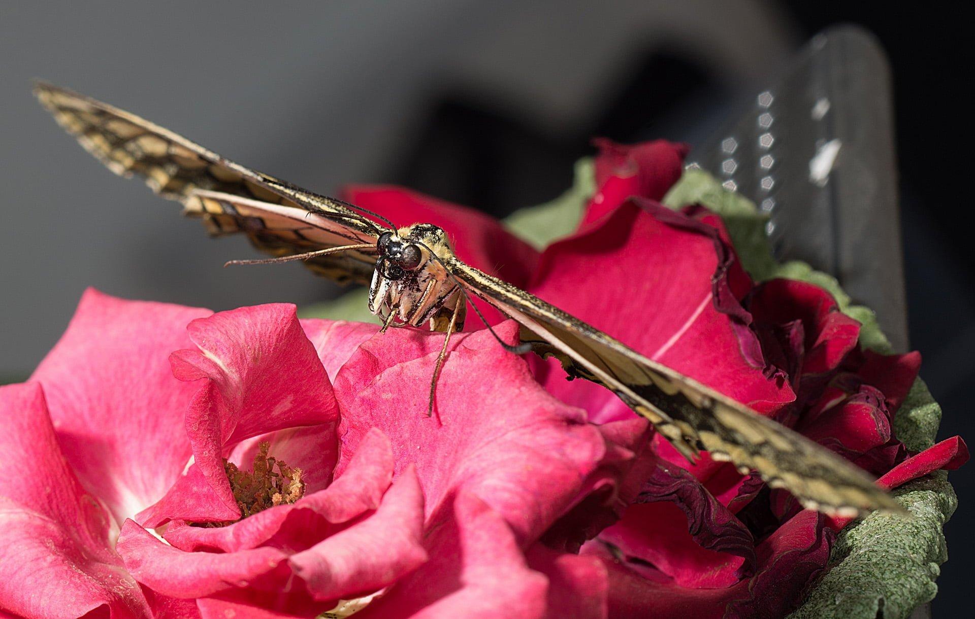 kelebek fotoğrafları – 2