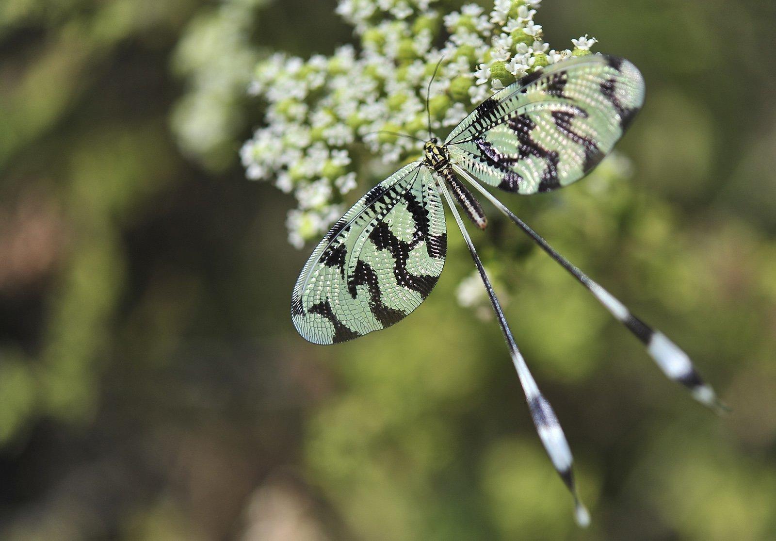 kelebek fotoğrafları – 3