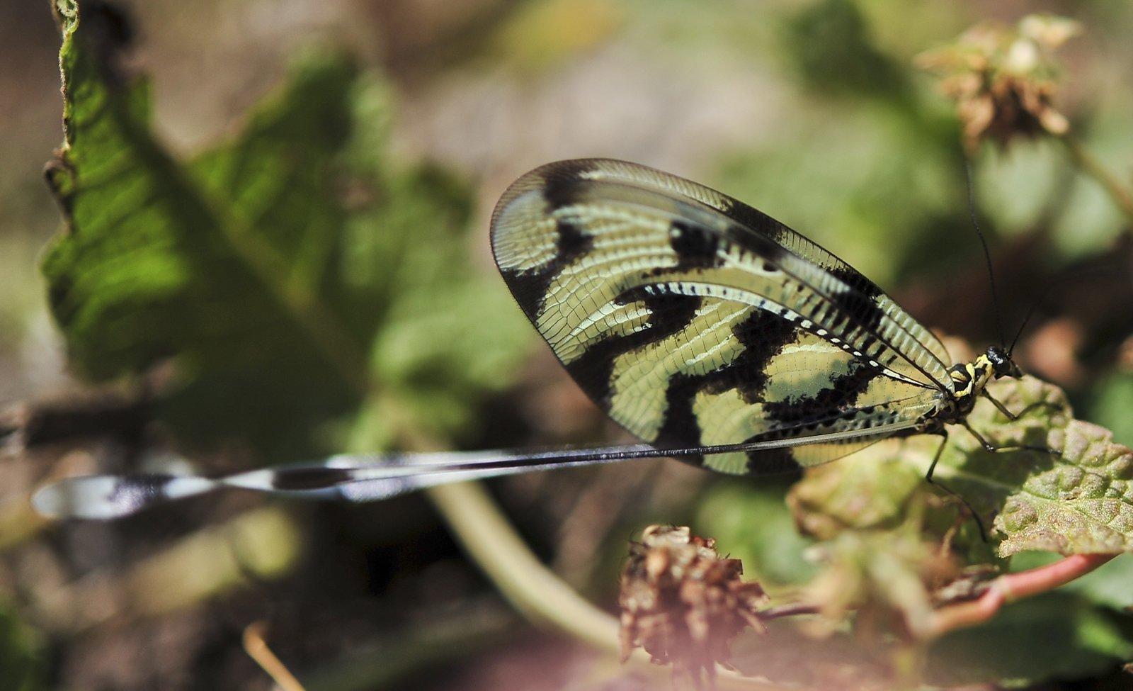 kelebek fotoğrafları – 4