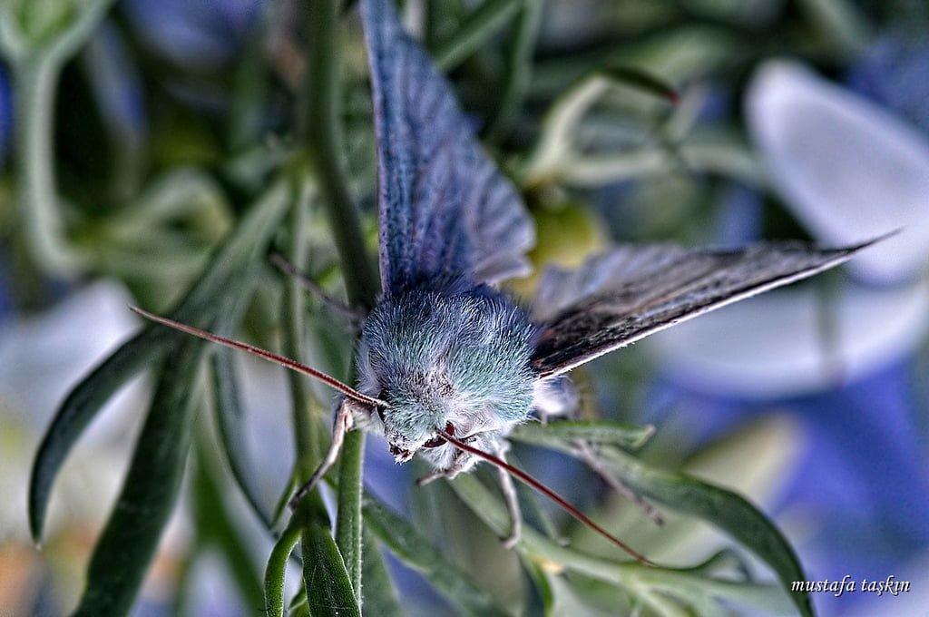 kelebek fotoğrafları