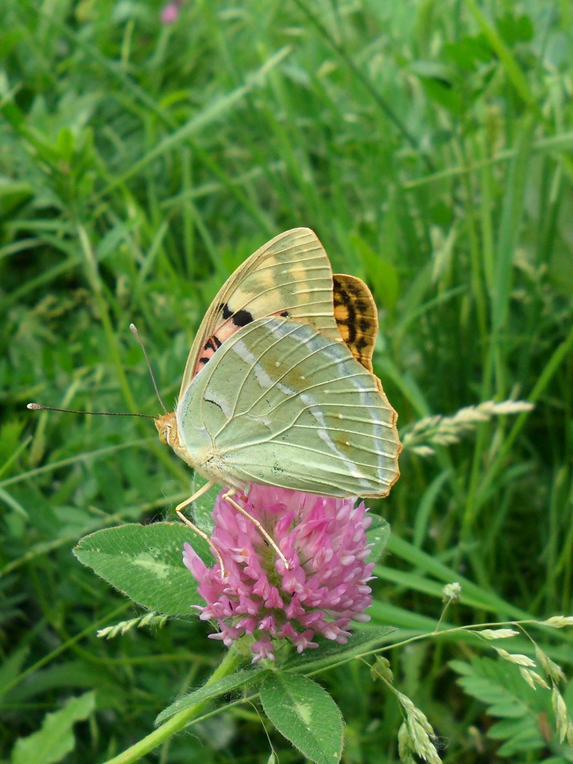 kelebek görüntüsü