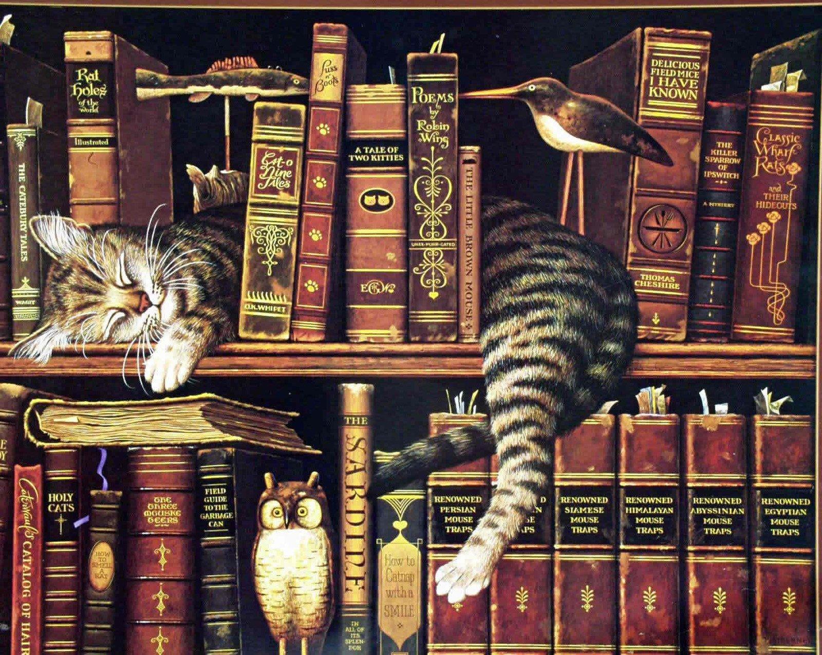 kitapların arasındaki kedi