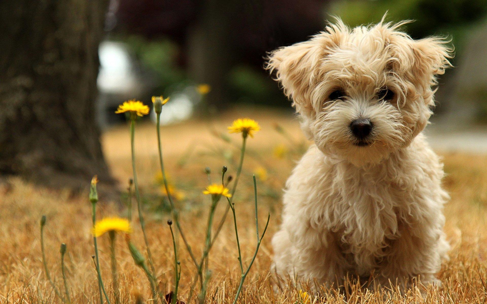 Köpek resimleri-11