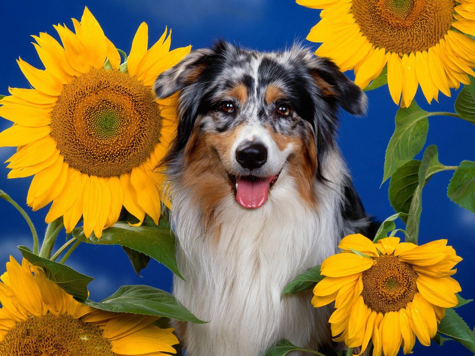Köpek resimleri-12