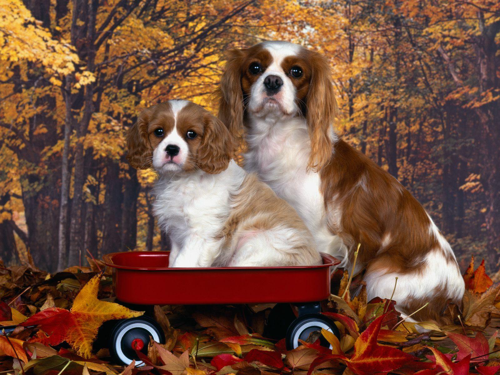 Köpek resimleri-13