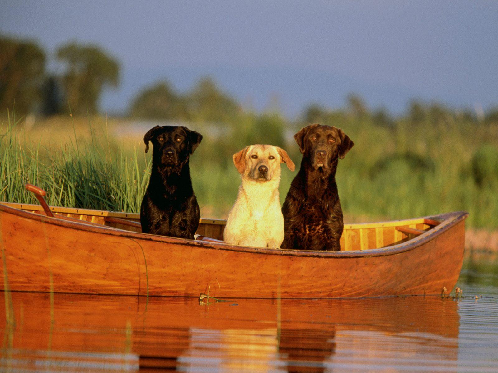 Köpek resimleri-14