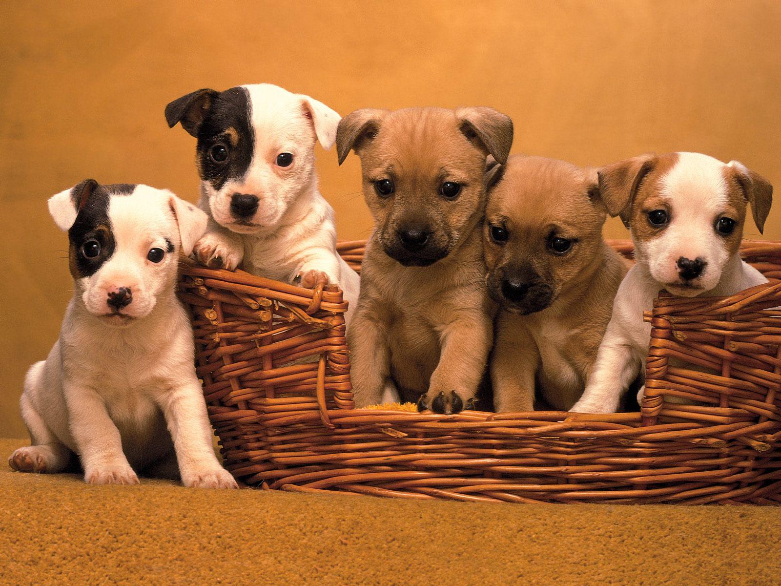 Köpek resimleri-15