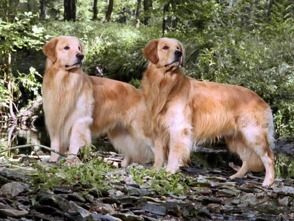 Köpek resimleri-16