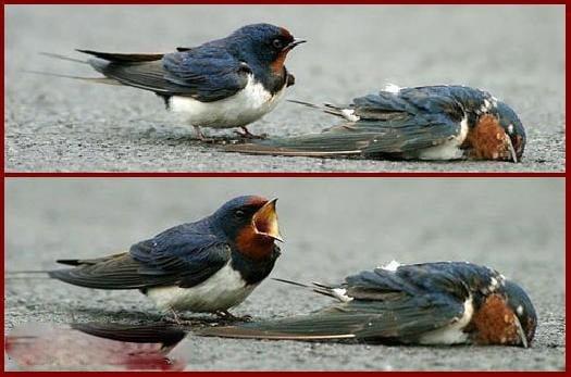 kuşun ölüme isyanı