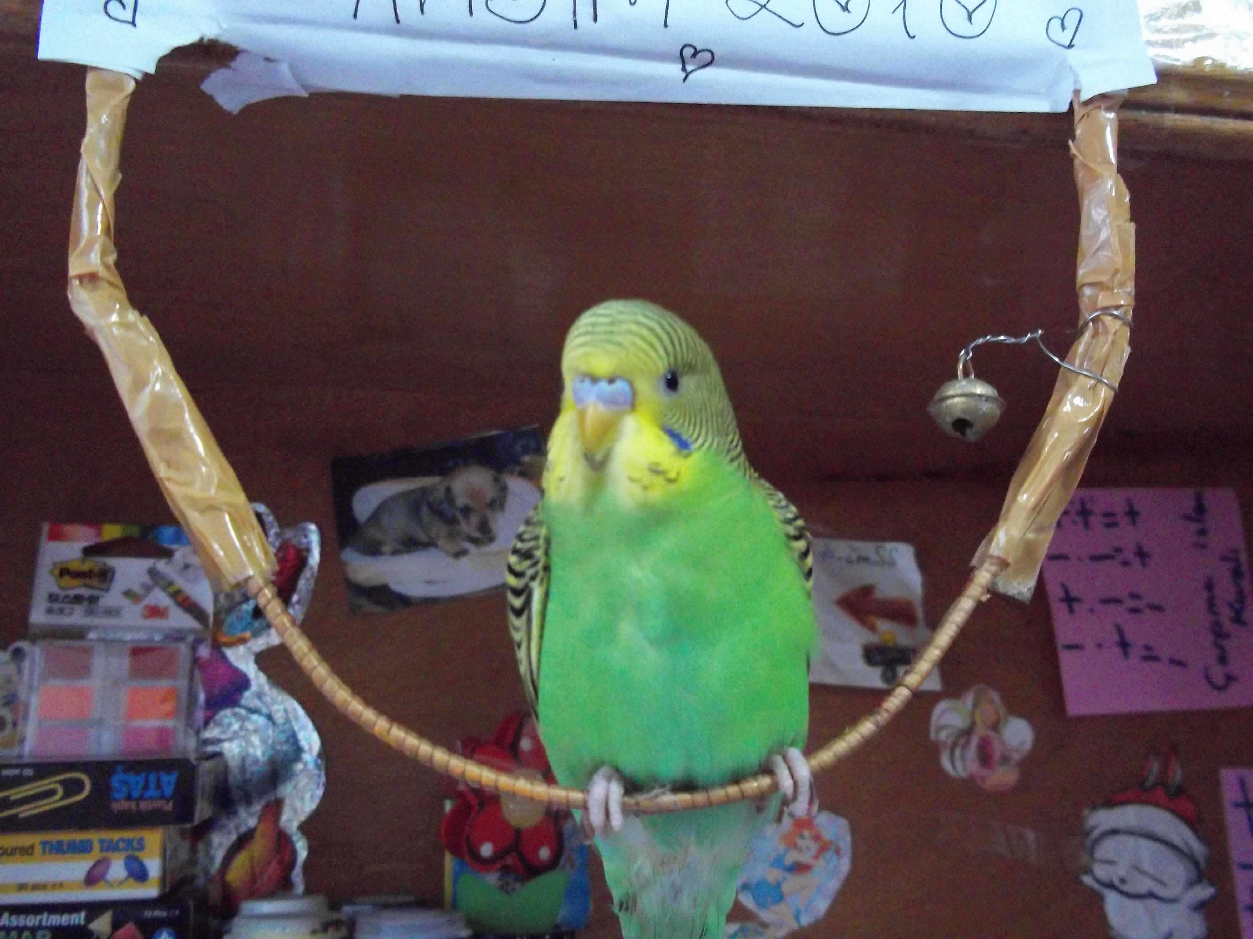 kuşun adı fıstık