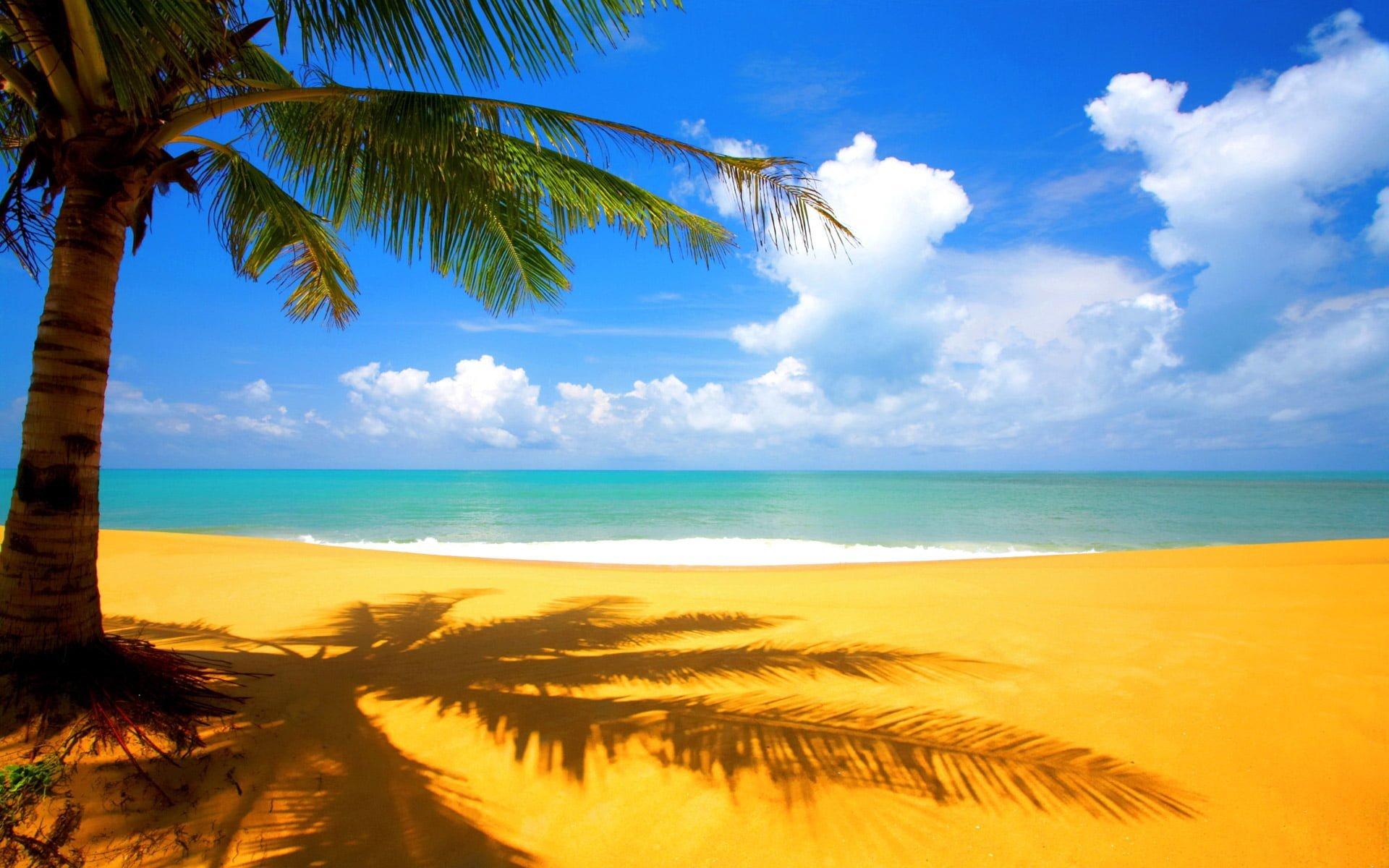 kumsal ve palmiye