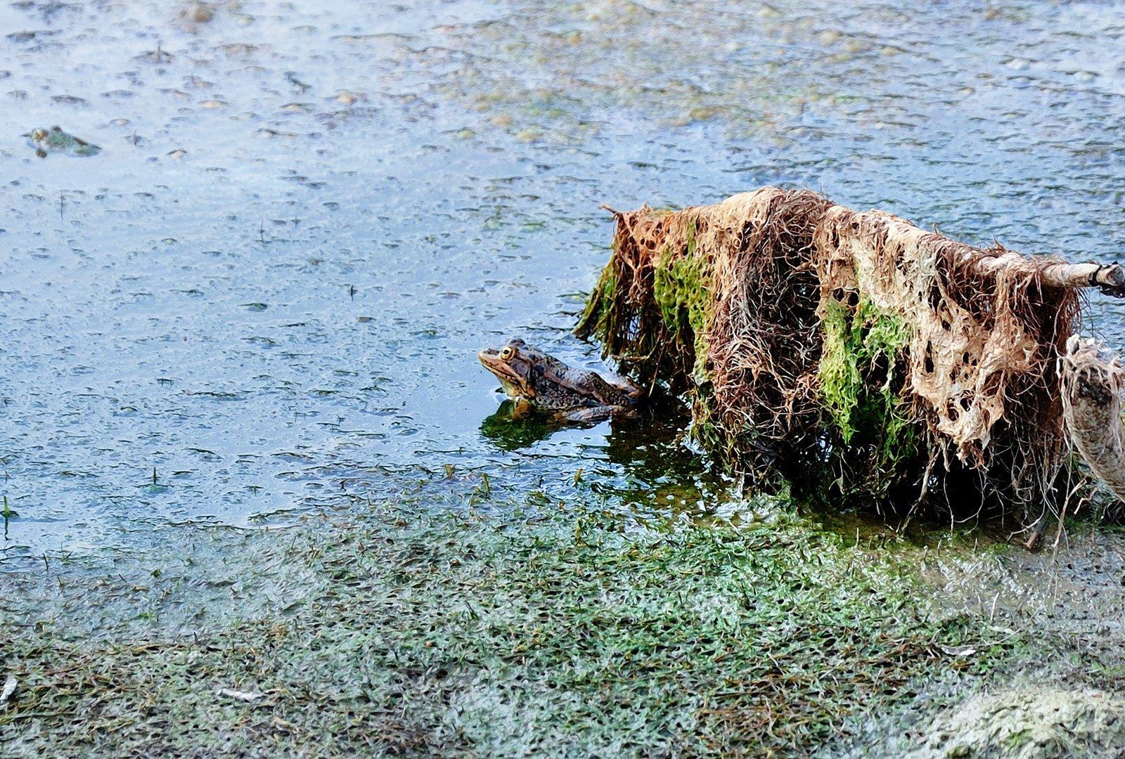 kurbağa fotoğrafı