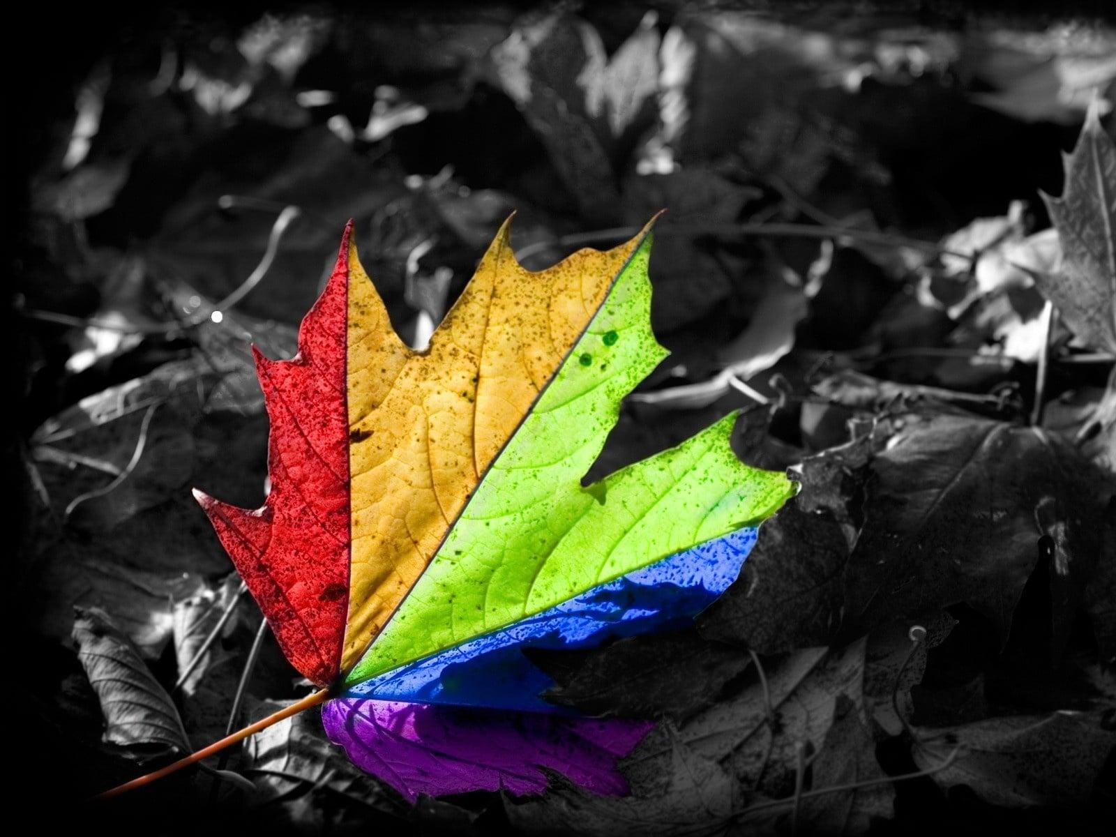 Kuru yapraklar-3