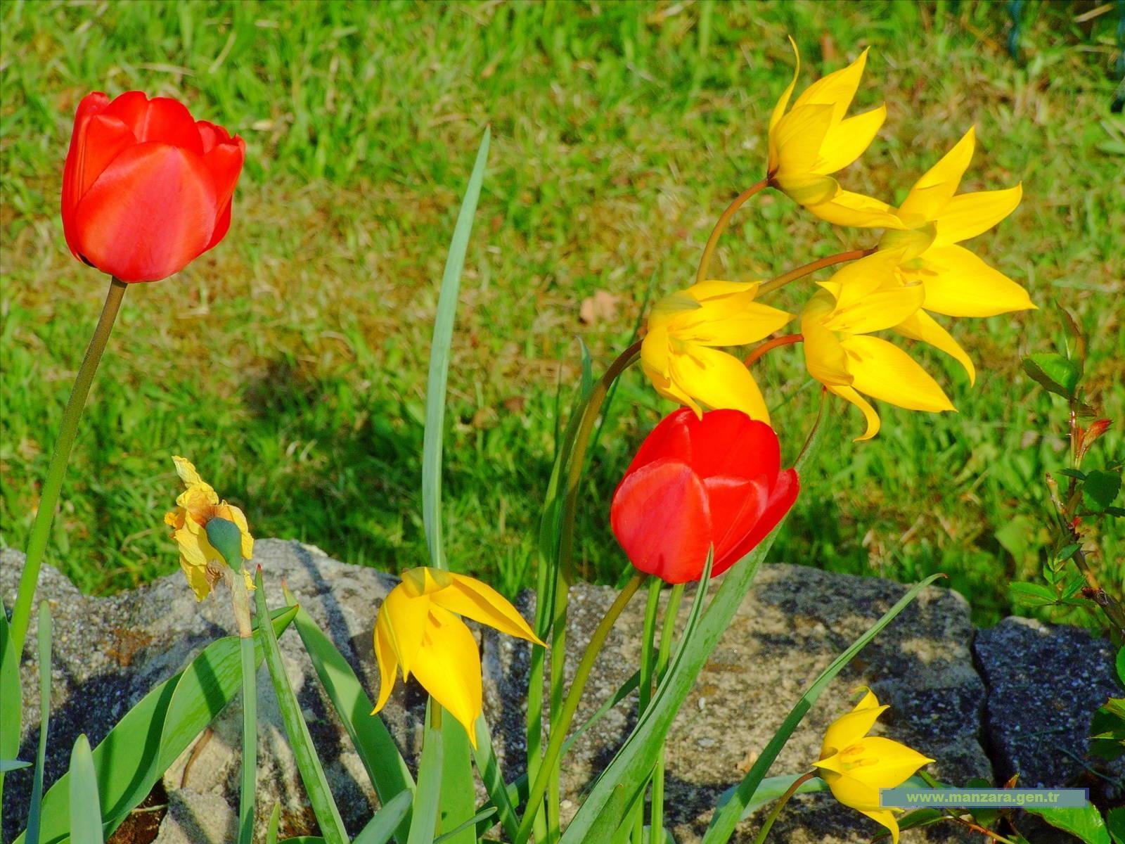 Çiçekli manzaralar-62