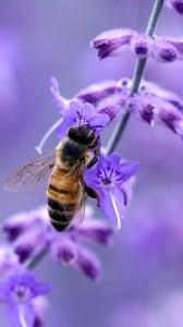 mükemmel arı  1080x1920