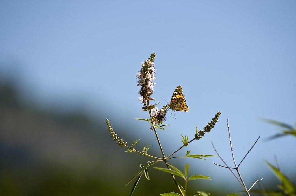 makro çekim kelebek fotoğrafları