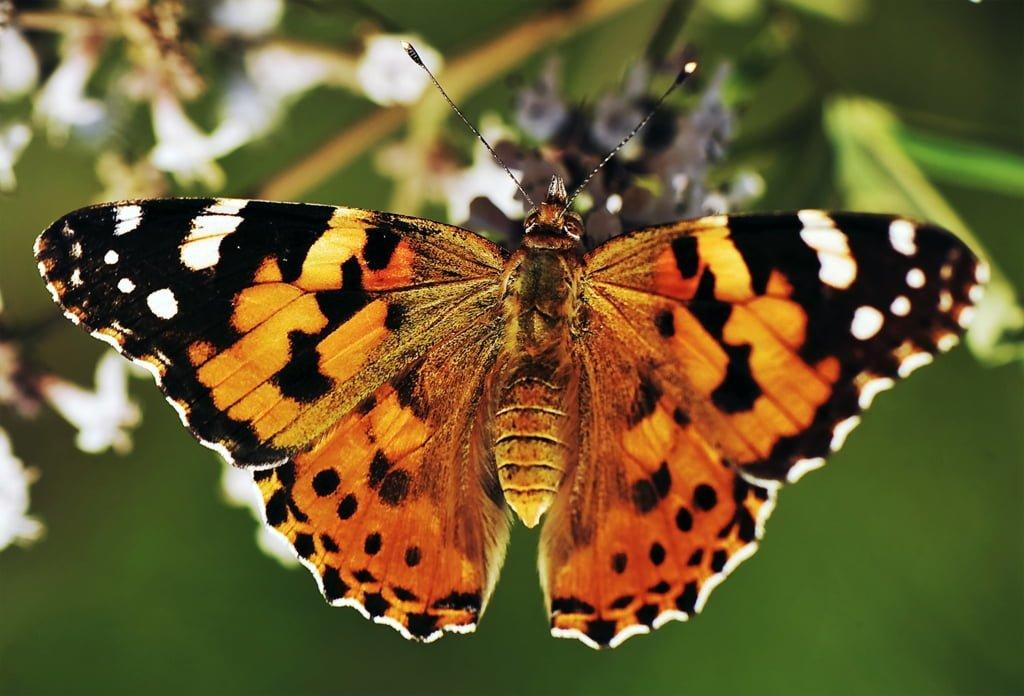 makro çekim kelebek resimleri