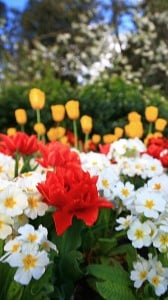 makro çiçekler 1080x1920