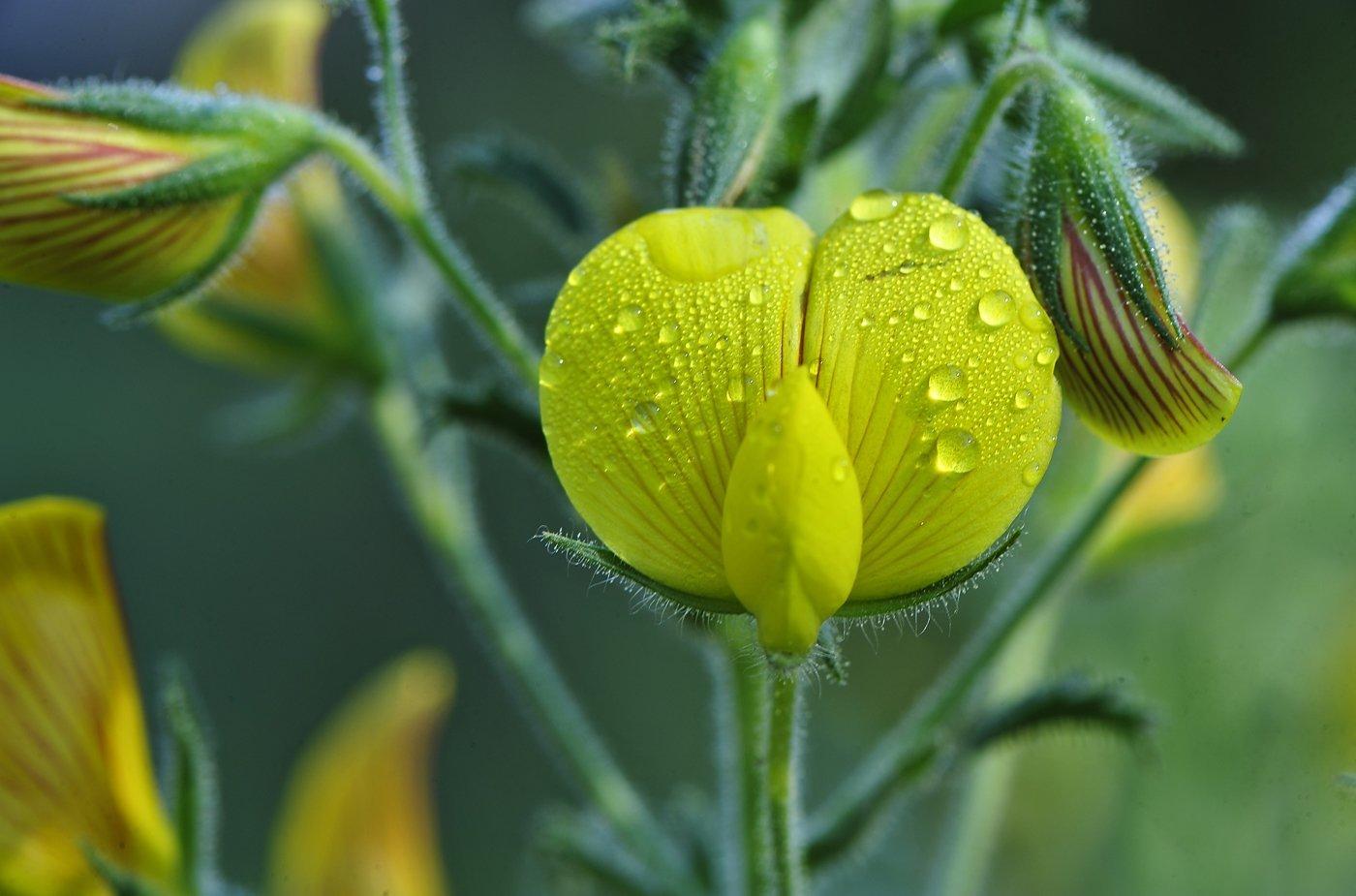 makro çiçekler