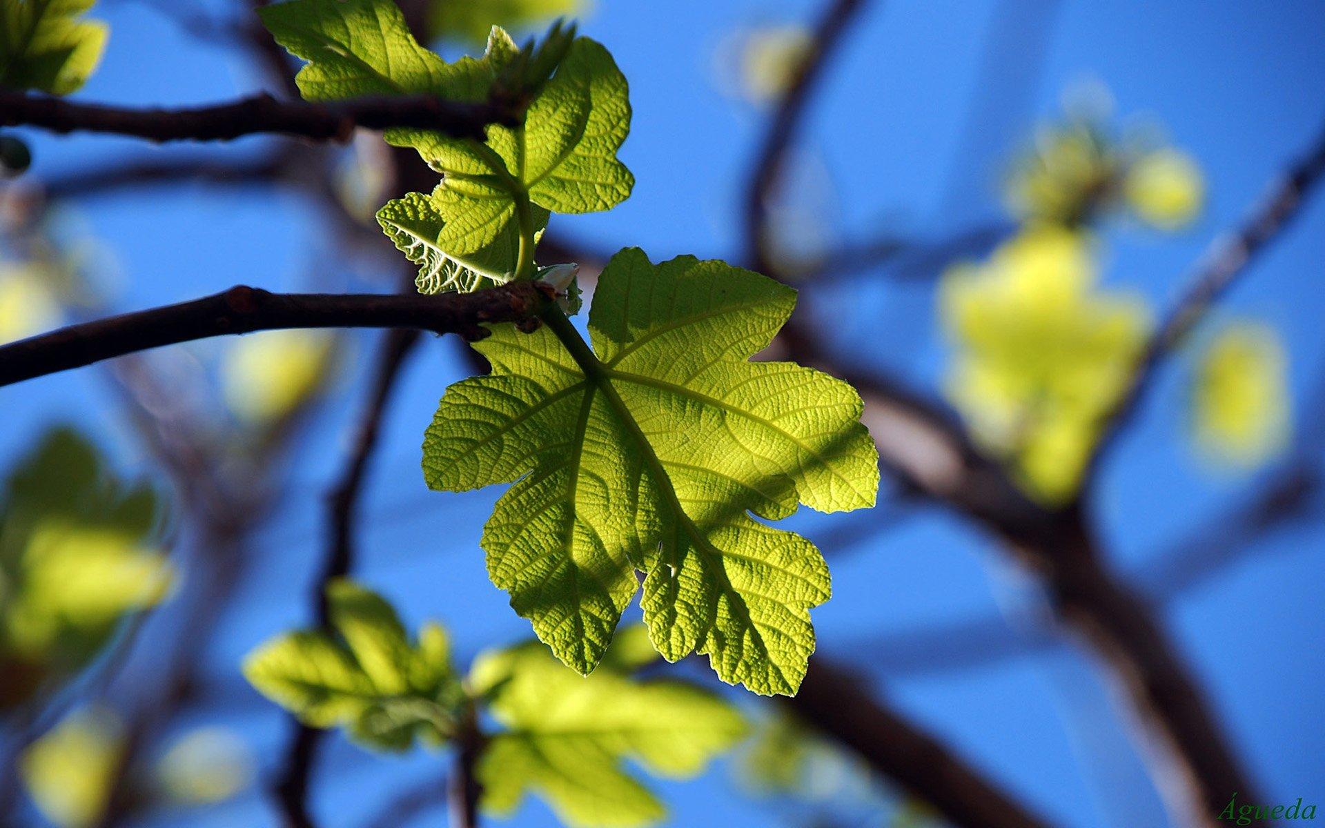 makro yeşil yaprak