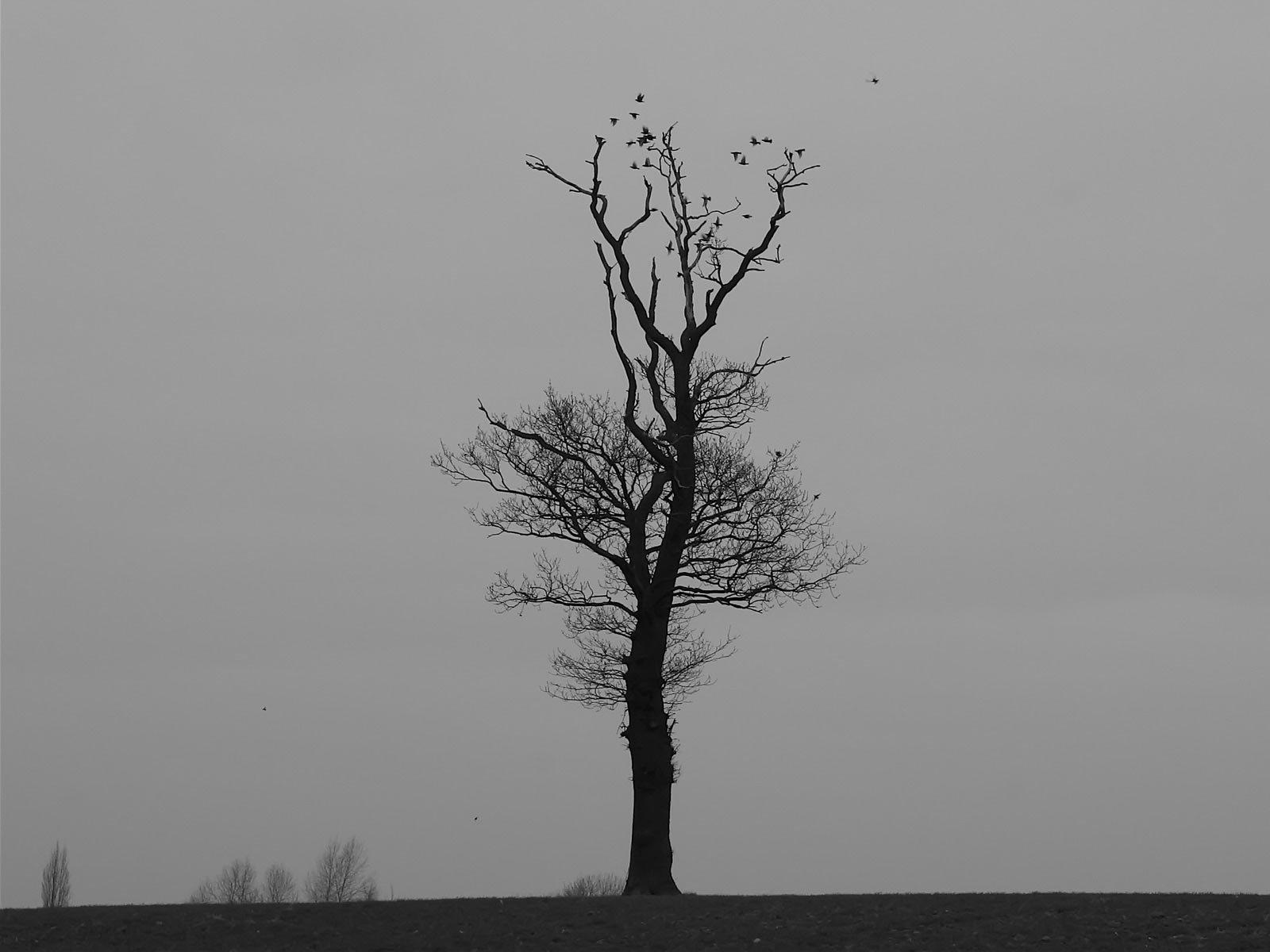 Manzara resimleri-164