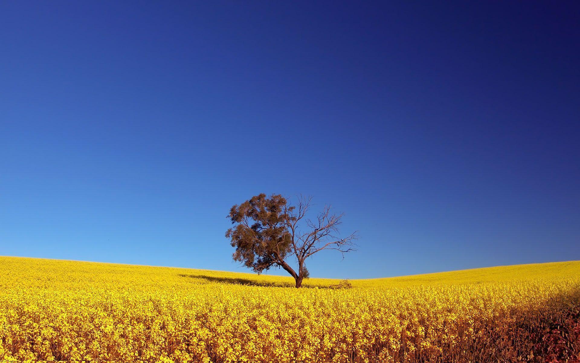 Sarı ve Mavinin Bütünlüğü