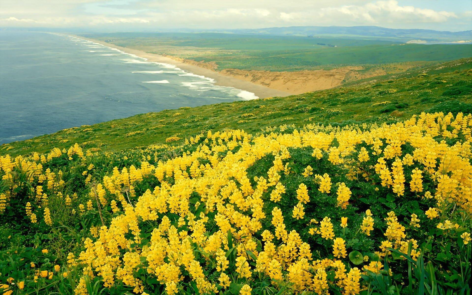 Yamaçtaki Sarı Kır Çiçekleri
