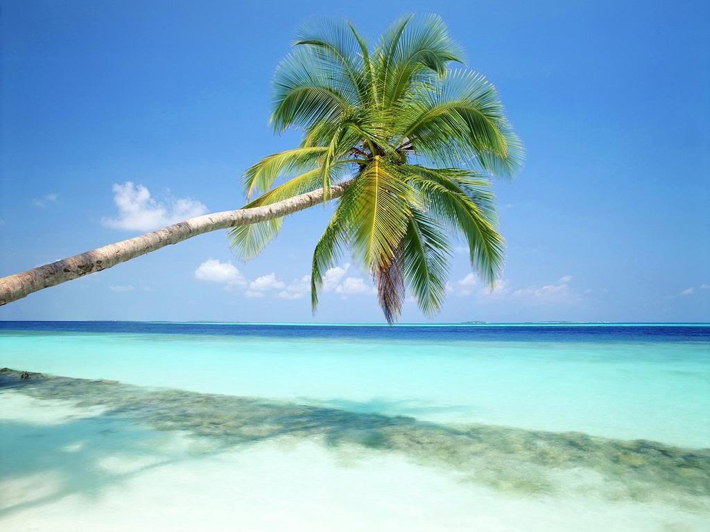 Muhteşem Palmiye Manzarası