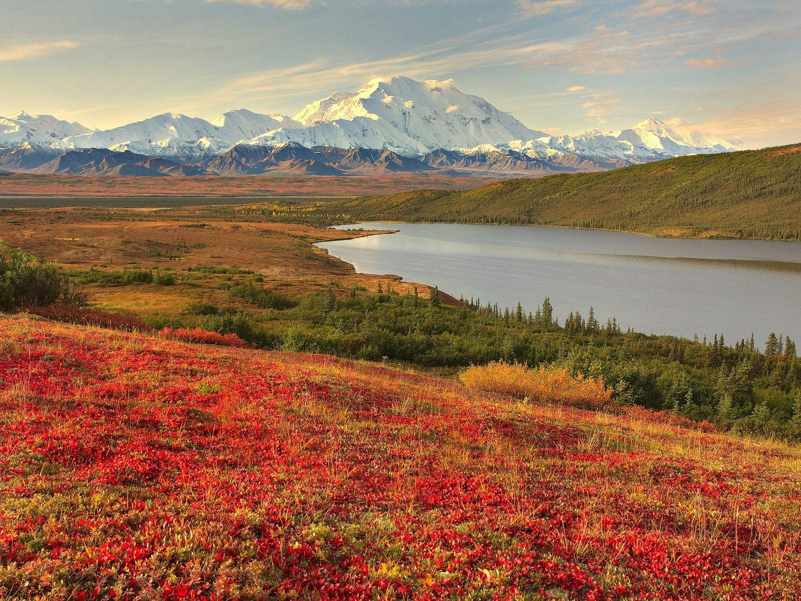 Kırmızı Kır Çiçekleri Manzarası