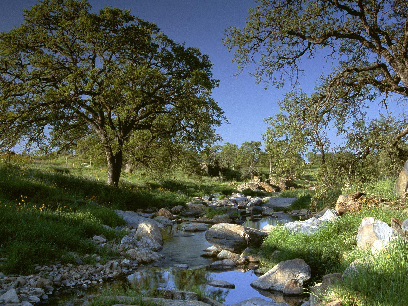 Kalifornia Doğa Manzarası