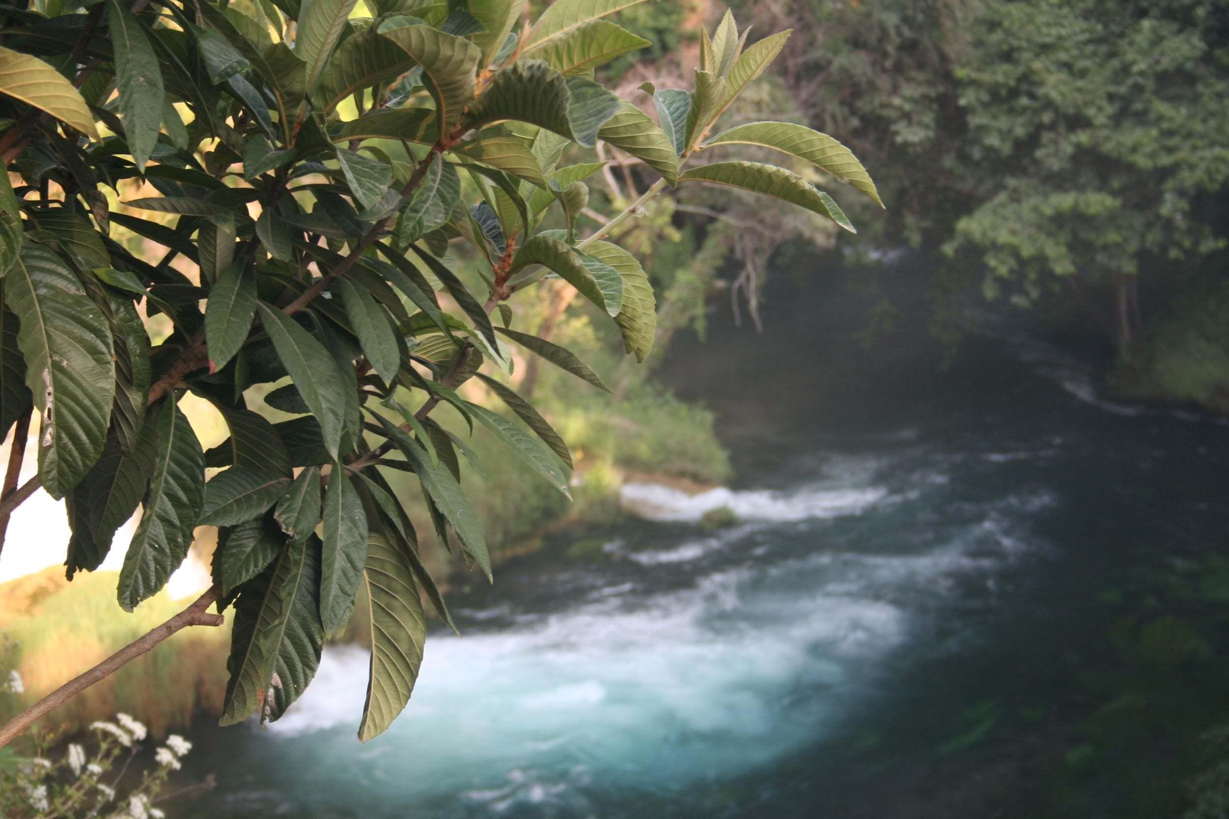Ağaçlı Akan Nehir Manzarası