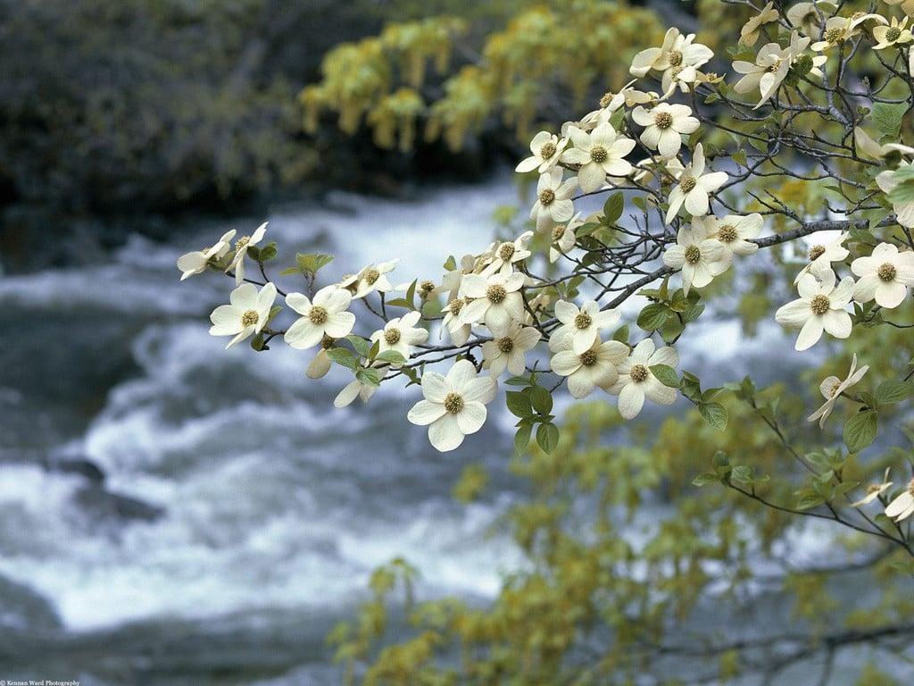Nehirli Manzara