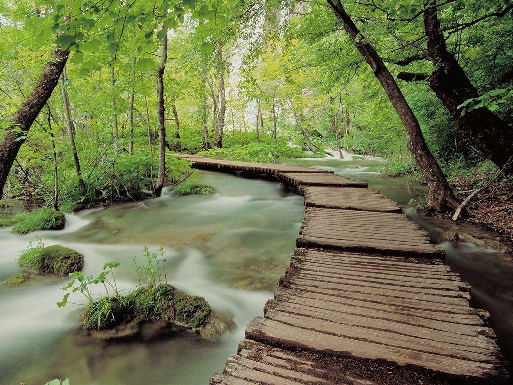 Ormandaki Nehir Manzarası