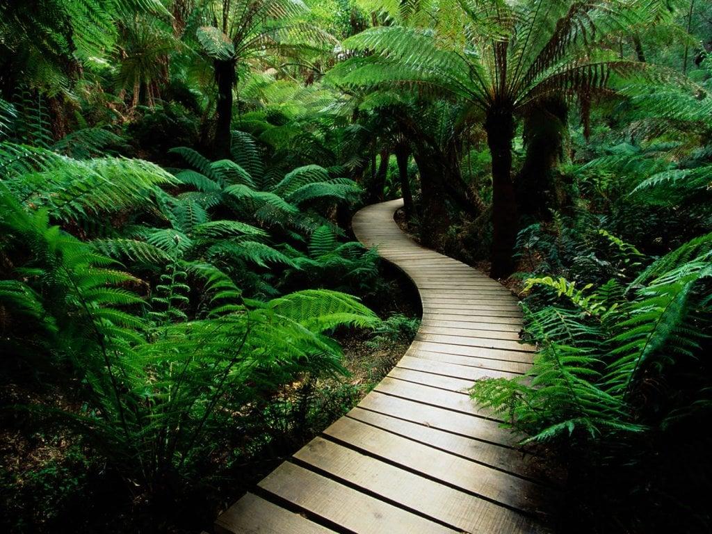 Ormanlı Tahta Yol Manzarası