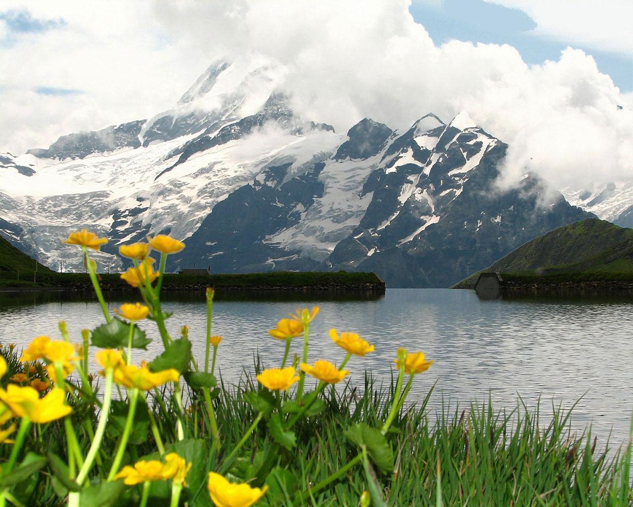 Sarı Çiçekli Göl Manzarası