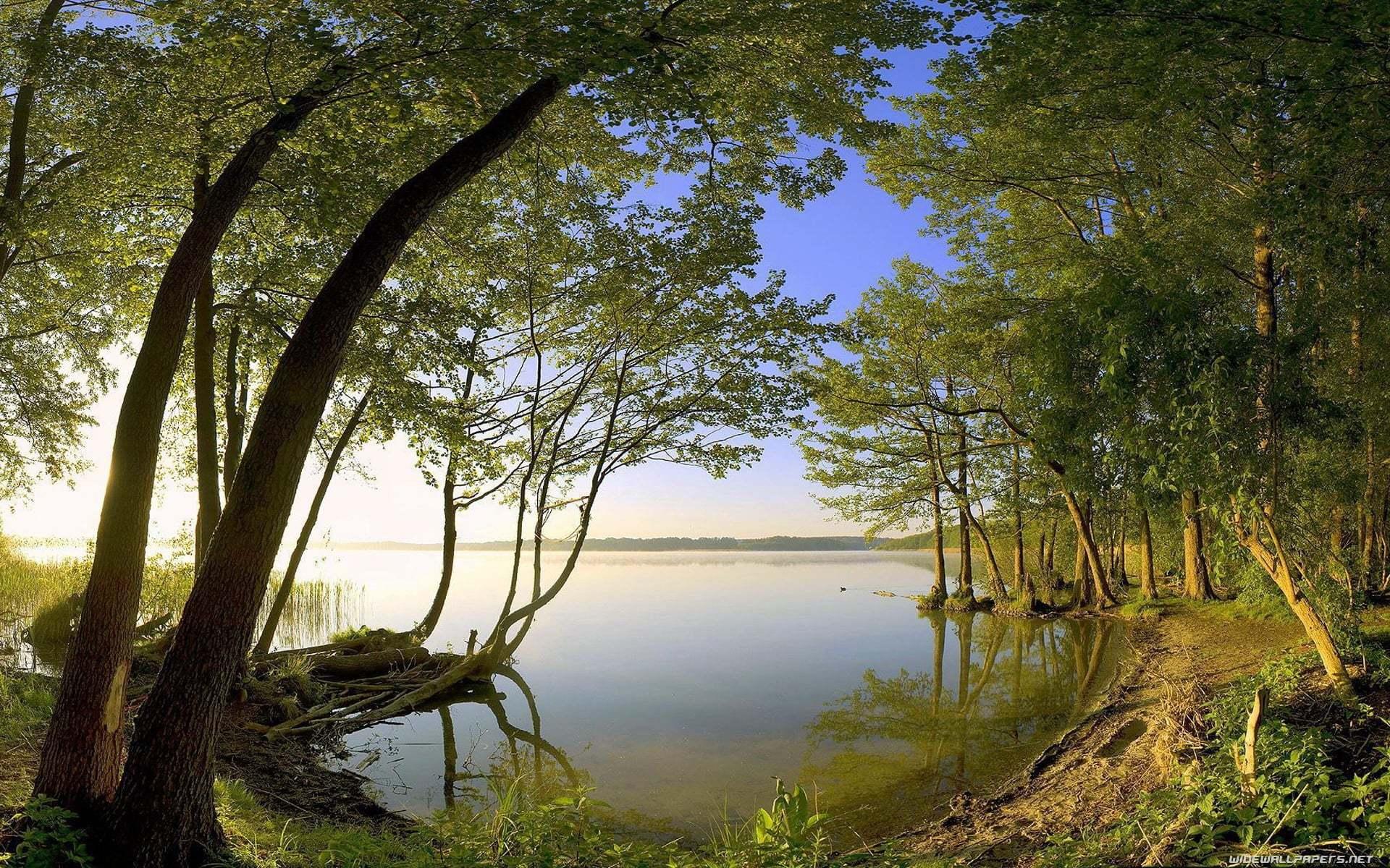 Durgun Su ve Doğa Manzarası