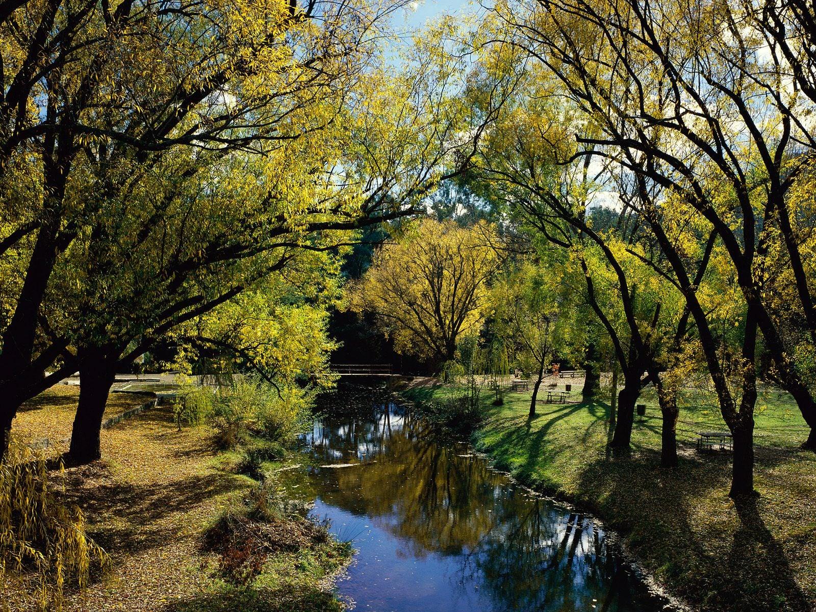 Ağaçlar Arasında Akan Nehir