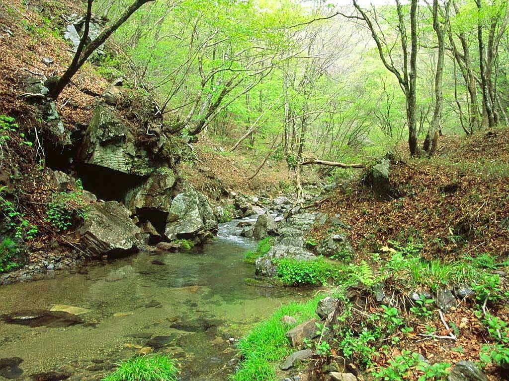 Canlı Yeşil Manzara