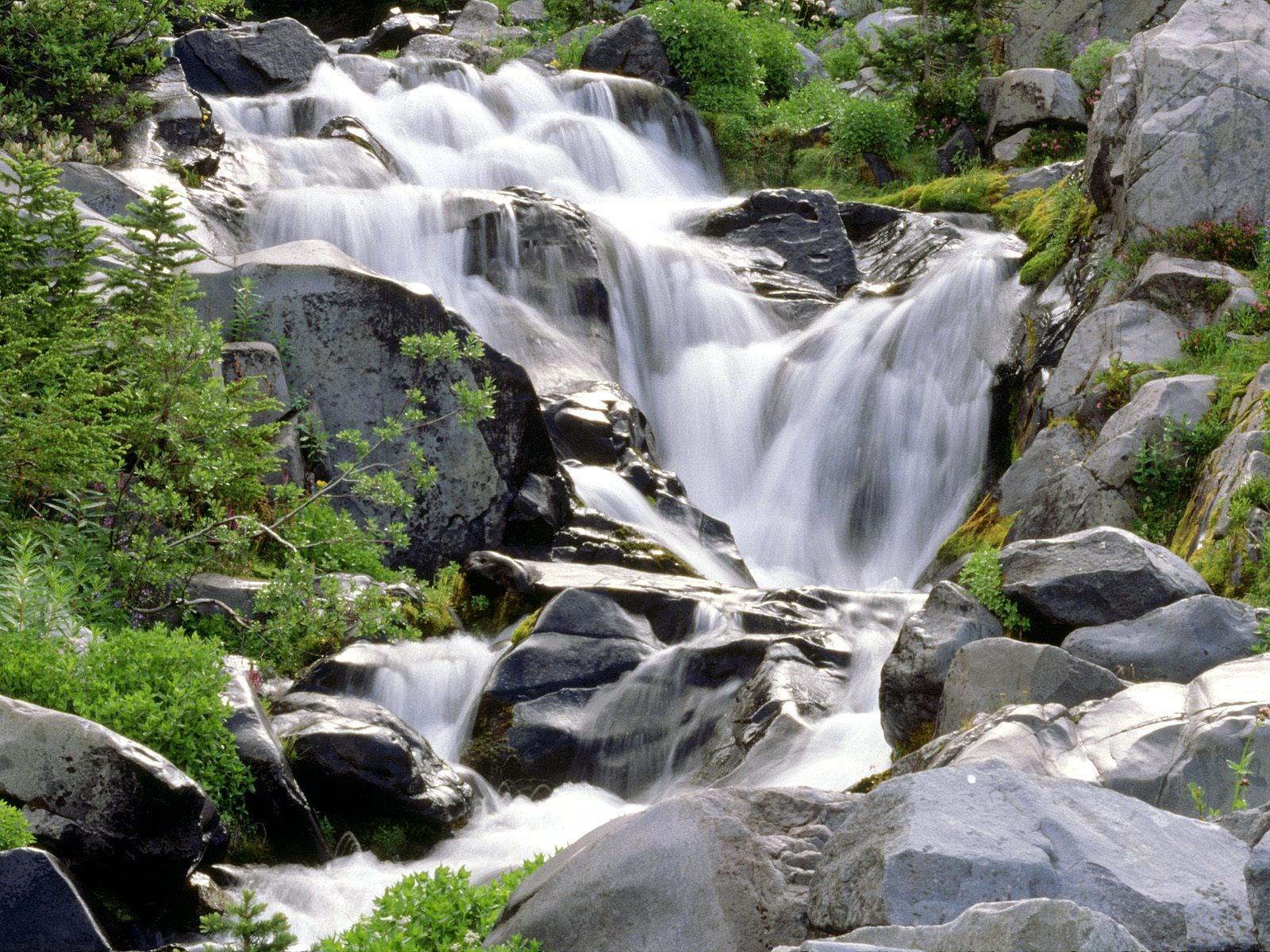 Suyun Doğaya Verdiği Hayat