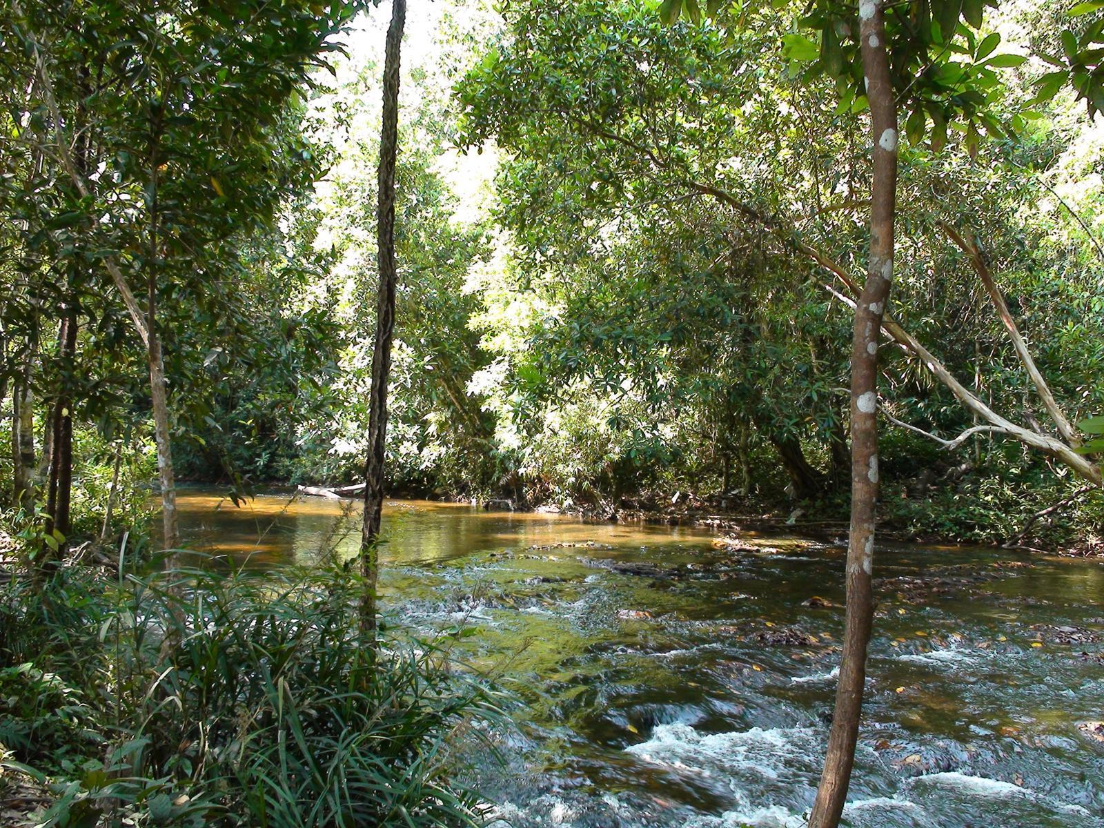 Ağaçlar Arasında Akan Su
