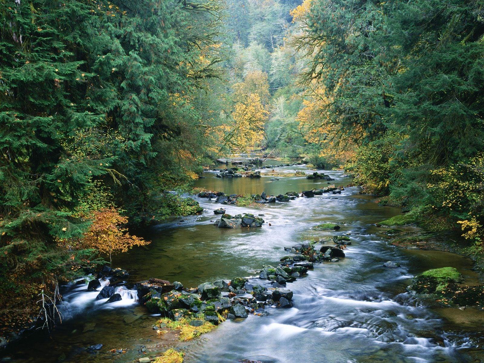 Oregon Akan Su Manzarası