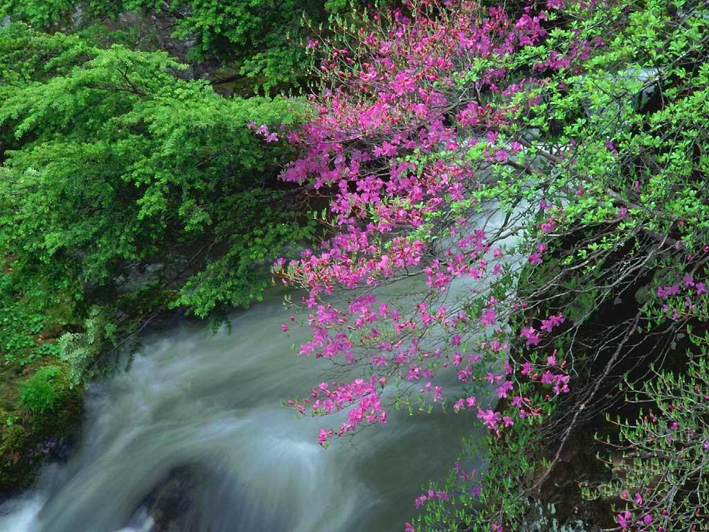 Pembe Çiçekli Manzara