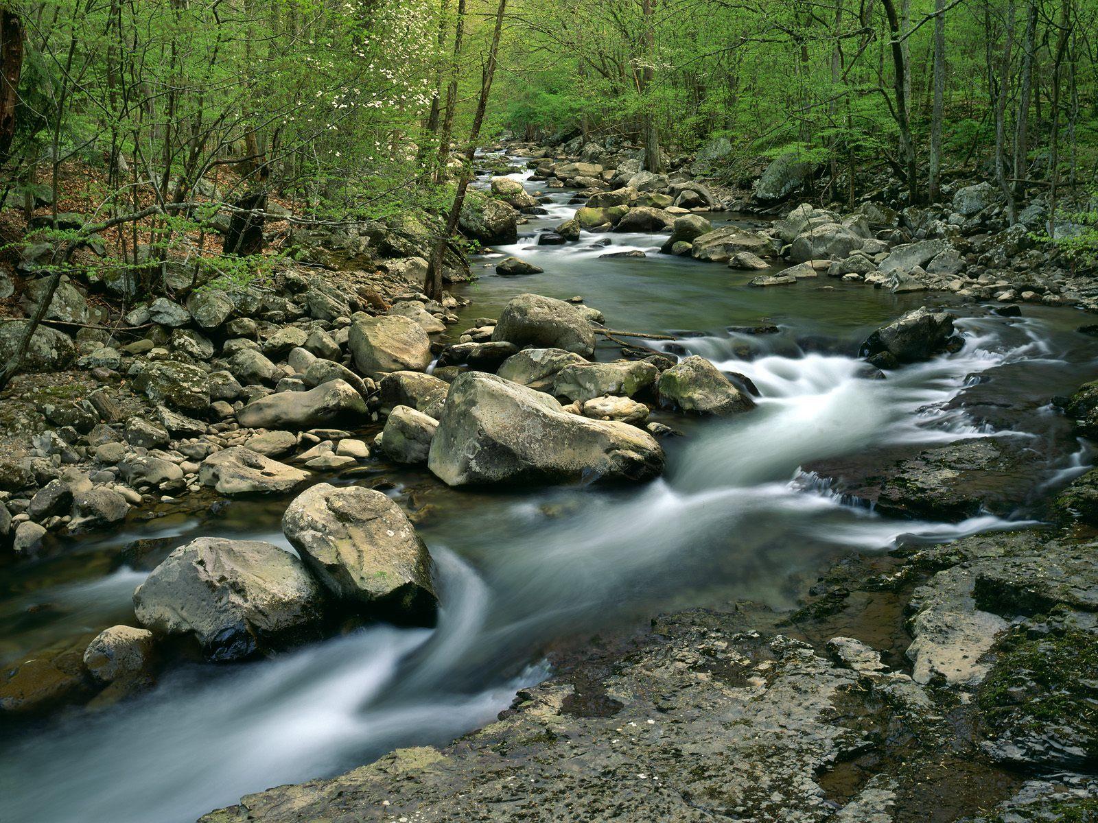 Ormandaki Nehir